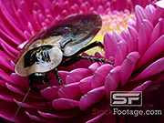 Watch free video Bugs Extreme Close Up in Ultra HD