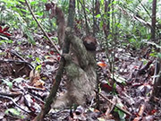 Watch free video Second Video Project: Sloth