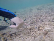 Watch free video Tropical Fishes while Snorkelling in Uganzaki