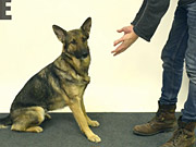 Watch free video Jose Ahonen Performs Magic for Dogs