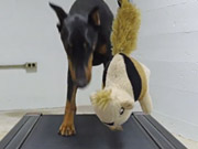 Watch free video GoPro Campaign: Doberman Chases A Squirrel