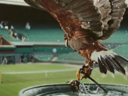 Watch free video Stella Artois Commercial: Rufus The Real Hawk-Eye
