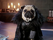 Watch free video Blinkbox: Pugs as Game of Thrones Characters