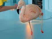 Watch free video Chambord: Because No Reason Flamingo