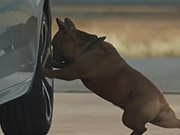 Watch free video Citroën Commercial: Dog Stretching