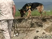 Watch free video K-9s Dig Training