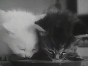Watch free video The Unique Documentary Footage of Cat's Life