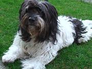 Watch free video Cute Dog