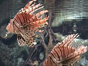 Mira dibujos animados gratis Exotic Fish
