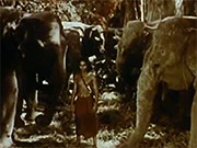 Watch free video Jungle Book