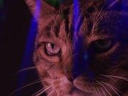 Watch free video Meow Mix Video: A Meow Mix by Ashworth
