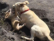 Watch free video Dog and Puppy