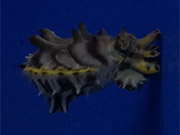 Watch free video Aquarium Life 3