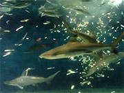 Mira dibujos animados gratis Feeding Fishes