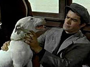 Watch free video It's a Dog's Life (1955)
