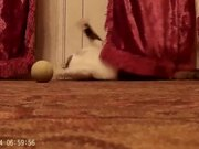 Cat Music Playing Ball