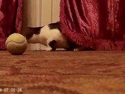 Watch free video Cat Music Playing Ball