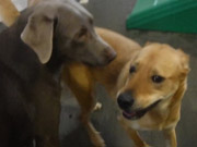 Watch free video Dogs having a Good Time