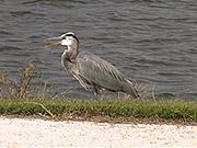 Watch free video Ackerman Park - Bird on the bank
