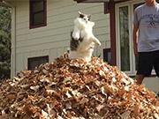 Watch free video Cute Flying Cat