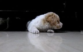 Cute Puppy at Home