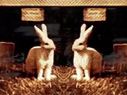 Watch free video Funny Bunnies