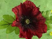 Watch free video Poppy Show