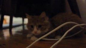 Watch free video Cat Bulka Is Fun