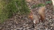 Watch free video Squirrel at the Nature Reserve 3