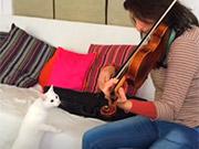 Xem hoạt hình miễn phí Violinna Vs White Cat