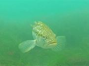 Watch free video Marine Room Eel Grass