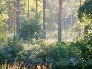 Watch free video Four Seasons - Vivaldi & Perfect Summer
