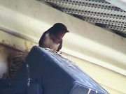 Watch free video Swallows - The Male Defends The Nest