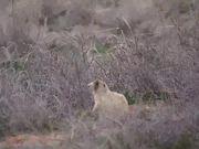 Watch free video Cute Field Rodent