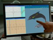 Watch free video Dolphin Tale 2 - Official Teaser Trailer