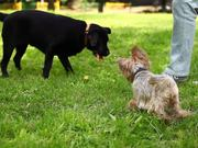 Watch free video My Funny Dogs