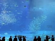 Watch free video Beautiful Aquarium with a Variety of Inhabitants