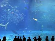 Beautiful Aquarium with a Variety of Inhabitants