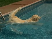 Watch free video Bailey Swims