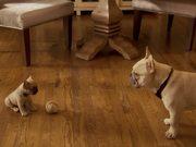 Watch free video Doritos Commercial: Puppy Dad