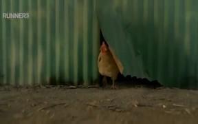 Watch free video Reebok Commercial: Live Free Range