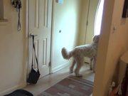 Watch free video David Surprises Harvey