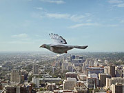 Watch free video JetBlue Commercial: Recurring Dream