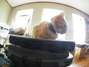 Watch free video Cat on the Bag