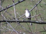 Watch free video Mockingbird Song