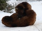 Watch free video A Pair Of Playful Bears