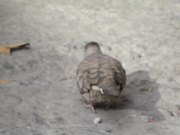 Watch free video Cute Bird