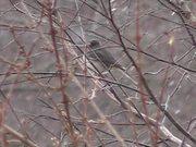 Watch free video Snow and Bird