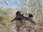 Watch free video Birds on the Tree