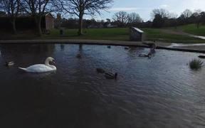 Watch free video Lake Birds